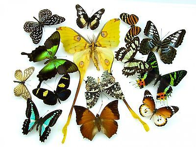 Butterfly moth collection x 14 SET specimens art photography exhibition 202