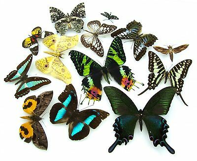 Butterfly moth collection x 13 SET specimens art photography exhibition 206