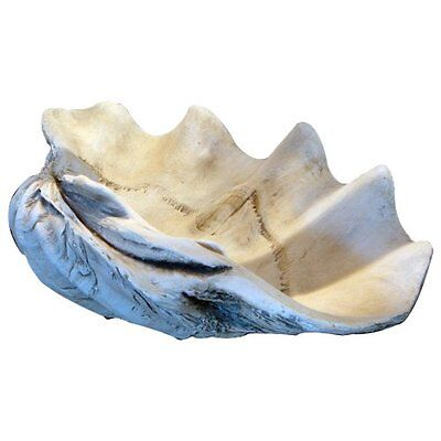 "GIANT 22"" CLAM SHELL tridacna gigas WHITE CLAMSHELL"