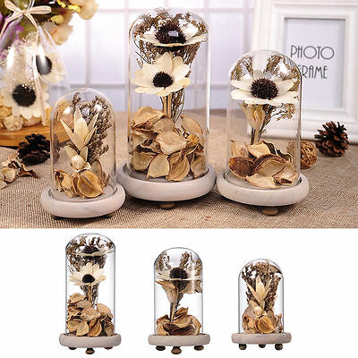 Creative Ecology Dried Flower Terrarium Glass Cover Craft Home Decoration Gift