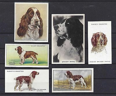 1931 - 1940 UK Dog Art Cigarette Card Collection x 6 ENGLISH SPRINGER SPANIEL