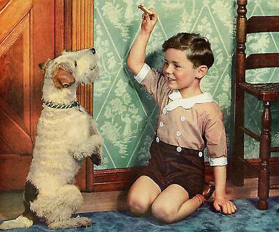 Wire Fox Terrier Boy Cream of Wheat Ad 1935 Original Color Print Boy Playing