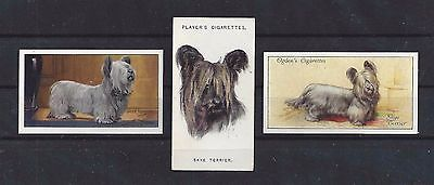 Rare Vintage 1929 - 1936 UK Dog Art Cigarette Card Collection x 3 SKYE TERRIER