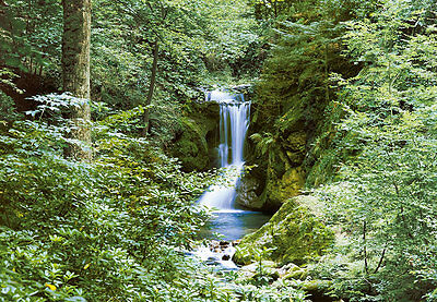 Wall Mural WATERFALL FOREST SCENE photo Wallpaper Bedroom wall art Green trees