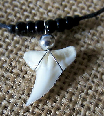 Real Tiger Shark Tooth Teeth Charm Pendant Cord Necklace Surf Beach Boy Girl New