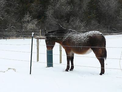 The Watering Post Livestock Waterer horse, cattle, Frostproof 0$ operating cost!