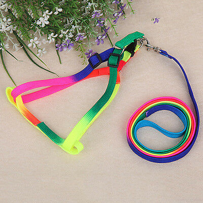 1x Pet Doy Puppy Matching Collar Lead Set Leash Adjustable Random Colors 120cm