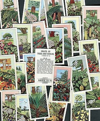 "Badshah Tea 1965 Set Of 25 ""fruits Of Trees And Shrubs"" Tea Cards"