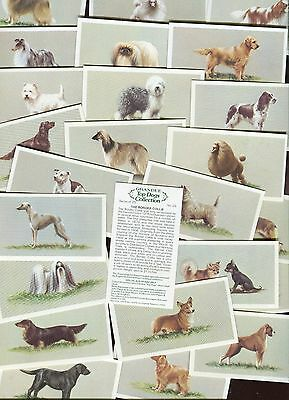 """Players Grandee 1979 Set Of 25 """"top Dogs"""" Cigarette Cards"""