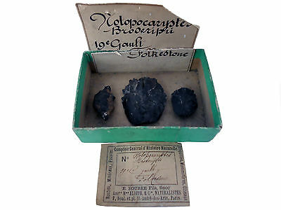 4 antique fossil crabs, Folkestone, ex. Wright / Cummings + Boubée see all pics!