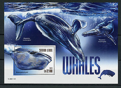 Sierra Leone 2015 MNH Whales 1v S/S Marine Mammals Bryde's Whale Stamps