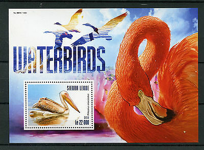 Sierra Leone 2015 MNH Waterbirds 1v S/S Water Birds Pelicans Flamingos Stamps