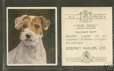 1939 UK Our Dogs Dog Art Godfrey Phillips Cigarette Card SEALYHAM TERRIER Puppy