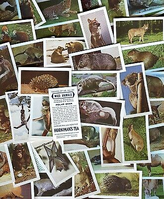 "Horniman Tea 1958 Set Of 48 ""wild Animals"" Trade Cards"