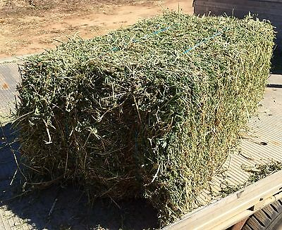 Lucerne Hay Small Square Bales, Suit Horses, Sheep, Cattle, Goats, Alpacas,