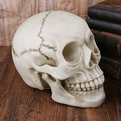 Life Size 1:1 Resin Human Skull Model Anatomical Medical Teaching Skeleton Head
