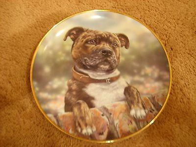 Staffordshire Bull Terrier plate (Distant Thoughts)