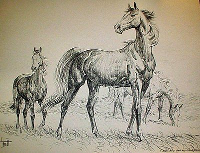 HORSES IN THE FIELD - Charcoal Print By Sam Savitt 1973