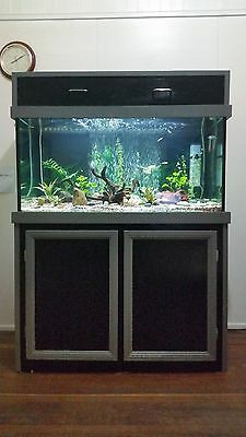 4x2x2 Fish Tank Aquarium with Cabinet Stand and Hood