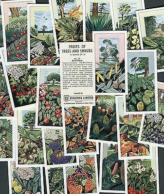 "Ringtons Tea 1964 Set Of 25 ""fruits Of Trees And Shrubs"" Tea Cards"