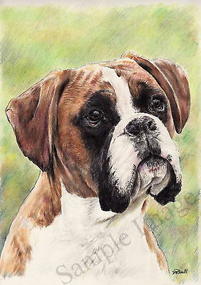 The Enquirer 2 Boxer Dog A4 Sized Art print of original Drawing by Steve Russell