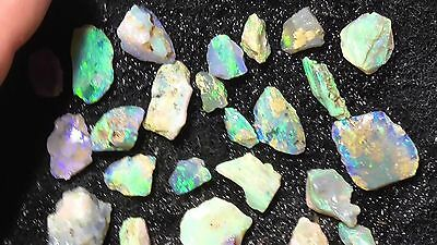 1150+Cts Opalised  Fossil / Gemstone Rough From Lightning Ridge,Opal RP848