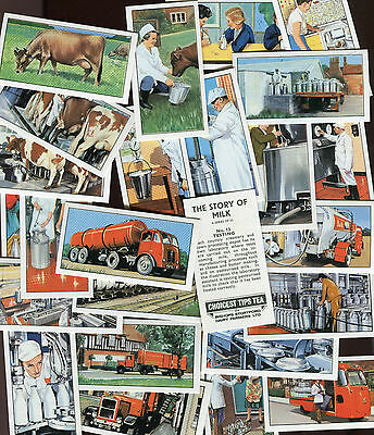 "Bishops Stortford 1966 Set Of 25 ""the Story Of Milk"" Tea Cards"