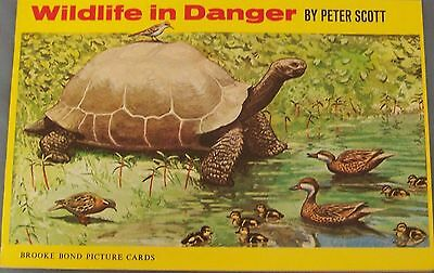 Brooke Bond Wildlife in Danger cards complete set in book