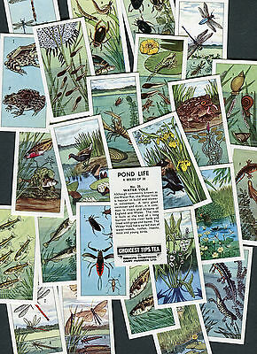 "Bishops Stortford 1966 Set Of 25 ""pond Life"" Tea Cards"