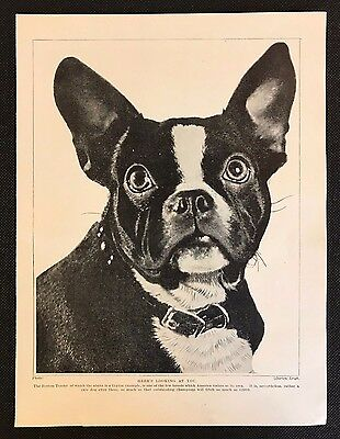 "Original 1934 Dog Print / Bookplate - BOSTON TERRIER, ""Here's Looking at You"""