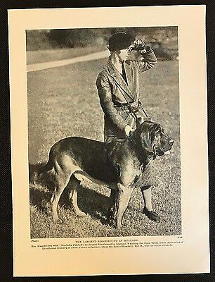 Original 1934 Dog Print / Bookplate - BLOODHOUND, Largest in England