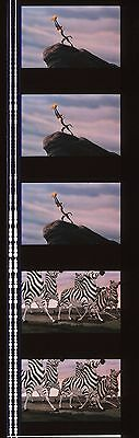 Lion King 35mm Film Cell strip very Rare k72