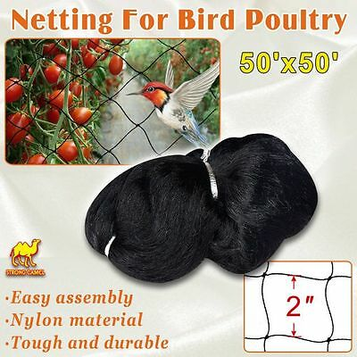 Bird Netting 50' X 50' Net Netting For Bird Poultry Avaiary Game