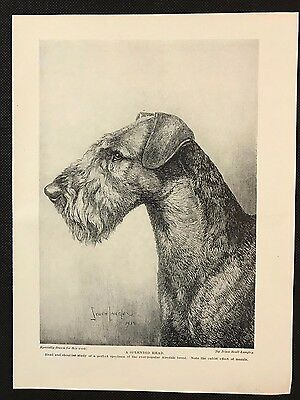 Original 1934 Dog Print / Bookplate - AIREDALE, Drawing of Head & Shoulder Study