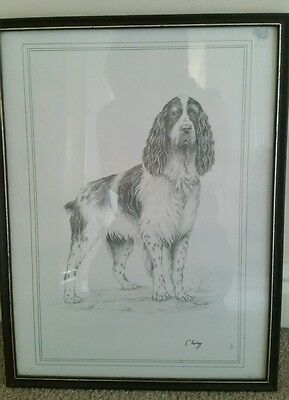 Framed line drawing Print of a Spaniel by C Varley