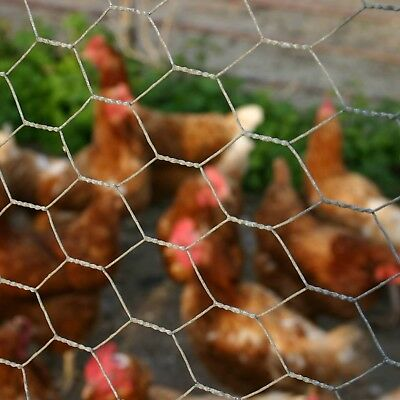 Wire Mesh Galvanised Netting Garden Fencing Chicken Rabbit | 11 DIFFERENT SIZES