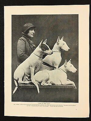 Original 1934 Dog Print / Bookplate - BULL TERRIERS, With Mrs Adlam, Named Dogs