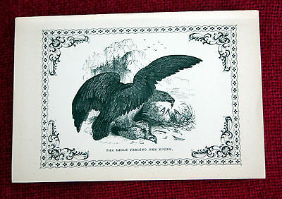 Antique Victorian Print Engraving Natural History 1840's The Eagle
