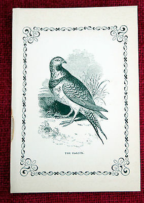 Antique Victorian Print Engraving Natural History 1840's The Falcon