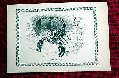 Antique Victorian Print Engraving Natural History 1840's The Scorpion