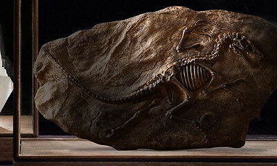 Highly Detailed Dinosaur Skeleton Wall Plaque – Resin Fossil