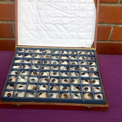 Very Rare Antique Glass Prosthetic Eyes Mans Woman & Child 72 Sales Mans Samples