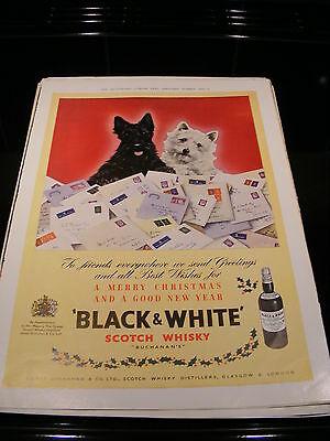 London News Advert Black And White Whisky &