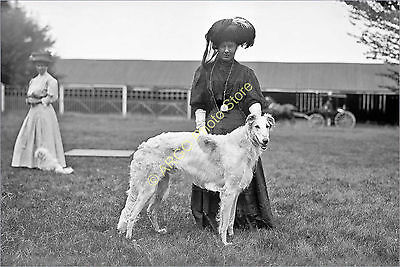 ad014 WOLFHOUND Russian Wolf Hound lady 1900s Mineola USA dog show photo
