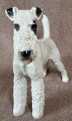 Wire Fox Terrier- Rosenthal Selb - Lot 34