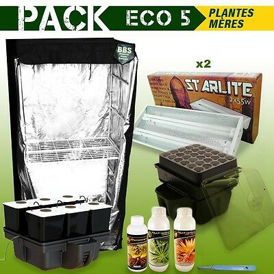 Pack Box Plantes Meres - Boutures Eco 5