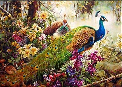[ New Release ] Diy Oil Painting by Numbers, Paint by Number Kits - Peacock - -