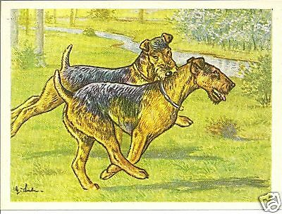 1952 Dog Art Print Card Austria Tobacco Company Bildwerk WELSH LAKELAND TERRIER
