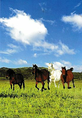postcard post card Animals HORSES foal colt filly #19