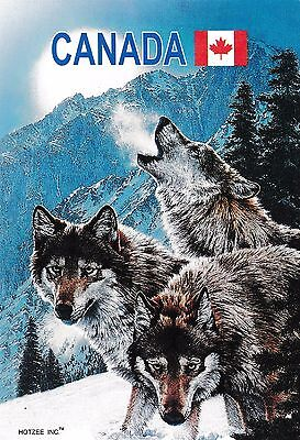 postcard post card Animals CANADA WOLF WOLVES #115